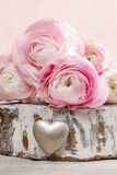 Pink persian buttercup flowers & x28;ranunculus& x29; Royalty Free Stock Photos