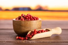 Pink peruvian pepper with autumn field behind. Lot of whole peruvian pink pepper in a wooden bowl with wooden scoop with autumn field in background royalty free stock photos