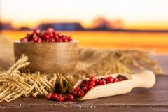 Pink peruvian pepper with autumn field behind. Lot of whole peruvian pink pepper in a wooden bowl with wooden scoop on jute cloth with autumn field in background royalty free stock photos