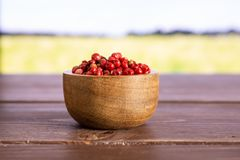Pink peruvian pepper with field behind. Lot of whole peruvian pink pepper in a wooden bowl with green wheat field royalty free stock photo