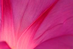 Pink petal abstract royalty free stock photography