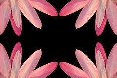 Pink petal border Royalty Free Stock Images