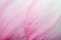 Pink petal close up. As background royalty free stock images