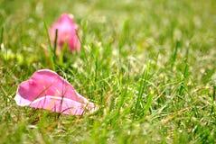 Pink petal Stock Images
