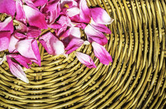 Pink petal rose on wooden woven wicker Royalty Free Stock Photography