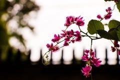 Pink Petaled Flower Stock Image