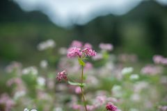 Pink Petaled Flower royalty free stock photography