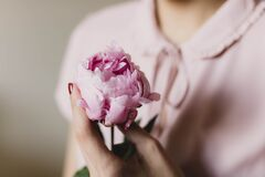 Pink Petaled Flower Stock Photography