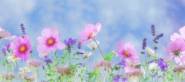 Pink Petaled Flower during Daytime Stock Image