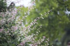 Pink Petaled Flower during Daytime Royalty Free Stock Photo