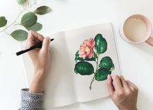 Pink Petaled Flower Drawing Royalty Free Stock Image