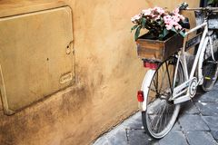 Pink Petaled Flower on White Commuter Bike Near Beige Painted Wall Royalty Free Stock Photo