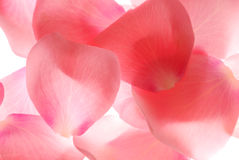 Pink petals Royalty Free Stock Photos