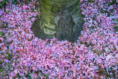 Pink petals Royalty Free Stock Images