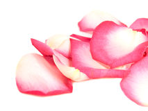 Pink petals background Royalty Free Stock Photography