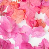 Pink petals background Royalty Free Stock Images