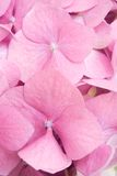 Pink petals background royalty free stock image