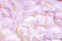 Pink Petals Background Stock Image