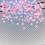 Pink cherry blossom with falling leaves