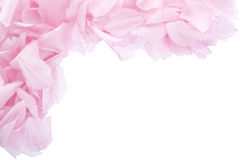 Pink petals frame. Pink petals border or frame isolated on white Stock Photo