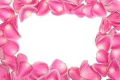 Pink petals frame Stock Image