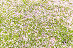 Pink petals on grass. Royalty Free Stock Photography
