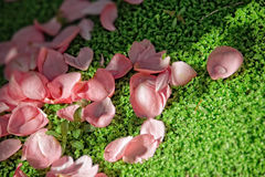 Pink petals on green Royalty Free Stock Images