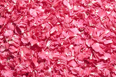 Pink petals Royalty Free Stock Photo