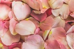 Pink Petals of wild rose flowers, dog-rose, briar, brier, canker-rose, eglantine, rose flowers background or pattern. Macro photo Royalty Free Stock Images