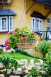 Pink petunia flower Stock Image