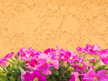 Pink petunia flower over grunge wall Stock Images