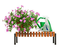 Pink petunia flowers in flowerpot with garden accessories. Stock Photo