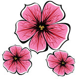 Pink  petunia flowers isolated on white Stock Photo