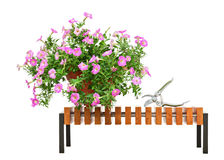 Pink petunia flowers on wooden bench isolated on white backgroun Royalty Free Stock Photos