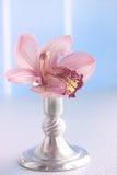 Pink Phalaenopsis Royalty Free Stock Images