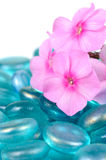 Pink Phlox Flowers with Blue Glass Stones Close-Up Stock Photos