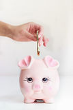 Pink pig money bank concept. Money box for savings and business plans ,one hand is putting dollars in the  piggy money box Stock Images