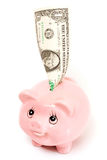 Pink pig money box isolated Royalty Free Stock Photo