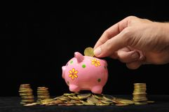 Pink Pig Piggy Bank Stock Photography