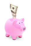 A pink piggy bank and 100 US dollar in it Stock Images