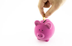 Pink piggy bank Stock Image