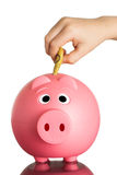 Pink piggy bank with Australian dollars Royalty Free Stock Photo
