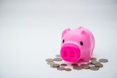 Pink piggy bank with coin for save your money Stock Image