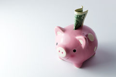 Pink piggy bank. Pink color piggy bank with US dollar on white background Royalty Free Stock Photos