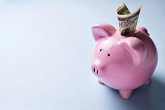 Pink piggy bank with a dollar bill in the slot Stock Photos