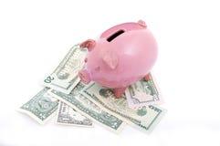 Pink piggy bank on dollars Stock Photos