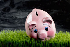 Pink Piggy Bank. Royalty Free Stock Photos