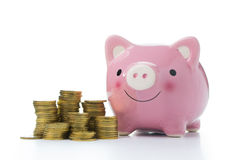 Pink piggy bank with gold coins Royalty Free Stock Images