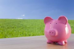 Pink Piggy Bank In A Green Field. Green investment concept shot of a big pink piggy bank in a green field with a bright blue sky Royalty Free Stock Images