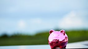Piggy bank on nature background. Pink Piggy Bank In A Green Field  nature background Stock Photos